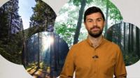 Reality Check's Jack Goodman against a backdrop of images of different types of forests