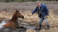Wild horse rescued from muddy bog