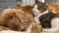 A dog cuddling a cat.