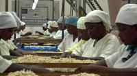 women processing cashew nuts