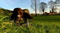 Lulu the litter picking spaniel