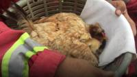 Firemen rescue chicks after volcano erupts in Guatemala