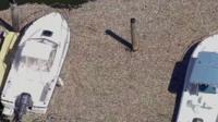 Dead fish surround boats