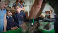 Pupils get up close to a spider