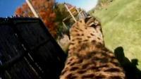 Cincinnati cheetah.