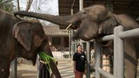 Elephants in the hospital