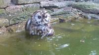 Owl bath