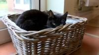 Black cat in a wicker basket