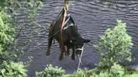 It is thought a visitor left a gate open allowing the animal to make its way to the water's edge