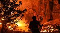 Man dousing wildfire raging near Monchique, 6 Aug 18