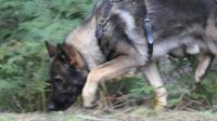 Police dog Blue