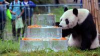 Pan Pan Panda with 30th birthday cake