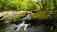 Llennyrch woodland