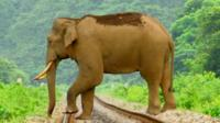 Increased mining in India's forests has led to elephants looking for food in villages.