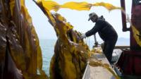 A fisherman on a boat looks at a row of seaweed