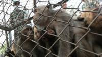 Monkeys stand in a cage before being moved from a community in Bang Khunthian district, on the outskirts of Bangkok, Thailand