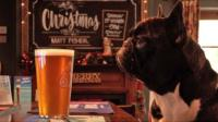 A dog sits at the bar in Britain's most dog friendly pub.