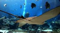 The aquarium at Atlantis, The Palm in Dubai
