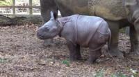 baby-rhino.