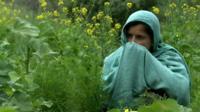 Woman works in a field