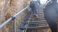 Metal stair up a cliff in China