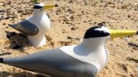 Replica little tern birds