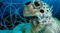 Photographer wins award for haunting image of trapped sea turtle