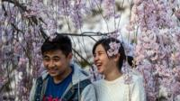 Man and woman sitting under cherry blossom in Kameoka, Japan