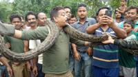 Forest range officer Sanjay Dutta holds a 30 foot-long python in Sahebbari village, Jalpaiguri district on 17 June 2018