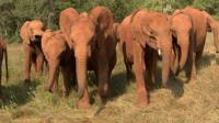 Elephants in Nairobi orphanage