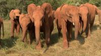 Elephants in Nairobi orphanage