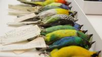 When birds hit planes, the outcomes can be deadly. This lab tries to prevent future collisions.