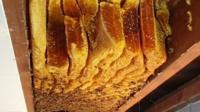 50kg beehive in ceiling