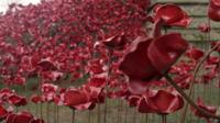 Poppies exhibition