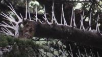 Spikes on trees