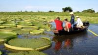 Giant lily pads have reappeared in a Paraguay lagoon, drawing droves of curious tourists.