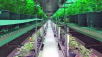 post-image-Marijuana votes put pressure on US government