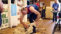 Daniel McIntyre shears a sheep during competition in the Australian state of New South Wales