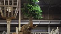 An elephant eating a Christmas tree