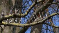 Tree spikes