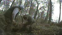 Men digging at a badger sett