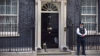 Larry the cat in front of No 10