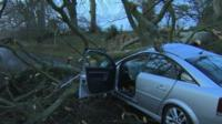 A tree fell on a car in Maghera, County Londonderry