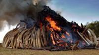 A Kenya Wildlife Services (KWS) officer stands near a burning pile of 15 tonnes of elephant ivory seized in Kenya at Nairobi National Park on 3 March, 2015.