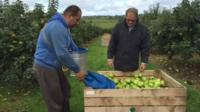There are 250 commercial growers in County Armagh, supplying the cider, bakery and fresh markets