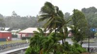Palm trees wave in strong winds