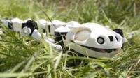 Robot salamander in the grass