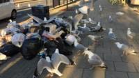 Seagulls in Aberystwyth