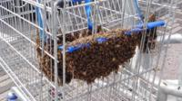 Bees in trolley