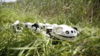 Robotic salamander
